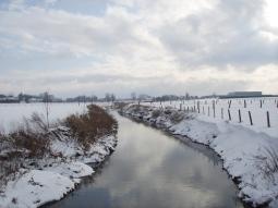 Mandel in de sneeuw